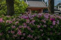 春の花咲く真如堂 - 鏡花水月