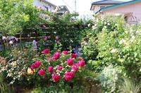 2019*5月末の庭 - my small garden~sugar plum~