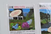 幻の蝶 オオルリシジミ その1 - 味わう瞬間 (とき)