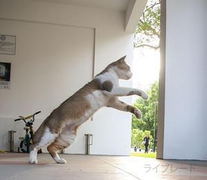 ご近所猫 2019.06.02 - Rayblade Photos