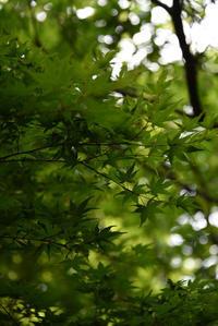 グリーン・グリーン - (=^・^=)の部屋 写真館