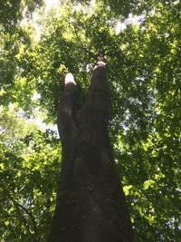 木を見て森を見ず - 家具工房モク・木の家具ギャラリー 『工房だより』