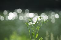 キラメキの中で - my Photo blog・・折々のメモ