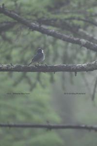 梅雨前の亜高山~麓まで1 - healing-bird