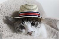 極楽ネコカレンダー - ぎんネコ☆はうす