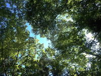 木漏れ日の季節・・・ - フライフィッシングでどこまでも
