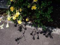 6月2日今日の写真 - ainosatoブログ02