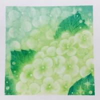 練習で白い紫陽花を描きました - デザインのアトリエ絵くぼ