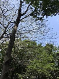 薪のための森林作業 - 楽家記(らくがき)
