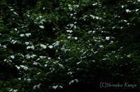アルペン - 撃沈風景写真