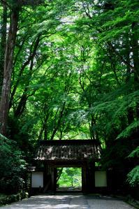 青もみじ - hanako photograph