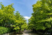 🍀 新緑 2019 -6- 真如堂 🍀 - ◆Akira's Candid Photography