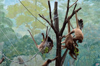 江戸川区自然動物園 - 動物園へ行こう