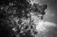 皐月の落葉 - Silver Oblivion