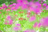 お散歩フォト行ってきました - 幸せのテーブル*maison flowertuft-flowers&tablesXphoto