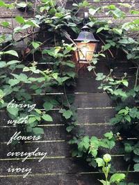 """〜6月23(日)は """"雪boloさん""""の """"天然酵母パンの日〜♬ -  Flower and cafe 花空間 ivory (アイボリー)"""