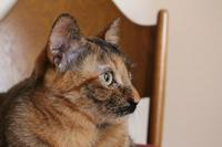 猫がいるということ - ボルドーとぺんぺん草