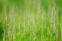 ネジ花の季節 - 雲空海
