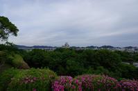 男山にて(2019/5/8) - 南の気ままな写真日記