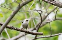 イマイチ - 趣味の野鳥撮影