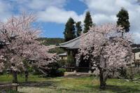 「桜」の反省会…⑥ - Taro's Photo