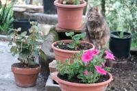 猫のミミとテッツィオ山の花たち - イタリア写真草子 Fotoblog da Perugia