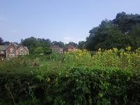 良い種を蒔く - メリーランド大学に入学しました