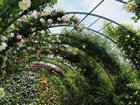 薔薇、薔薇、薔薇のあしかがフラワーパーク5 - 光の音色を聞きながら Ⅳ
