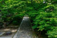 新緑の一休寺 - 花景色-K.W.C. PhotoBlog