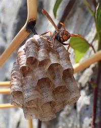 蜂始動 - 清治の花便り