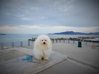 迎えた朝~♪ - 白犬ボロニーズ:ビアンコの日記