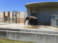 大きいなぁ - 動物園へ行こう