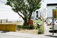 老夫婦の下草刈りと恵庭市長寿大学講座 - 照片画廊