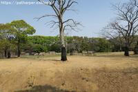2019年4月のんほいパークその3類人猿たち - ハープの徒然草