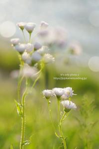 春紫苑 - It's only photo 2