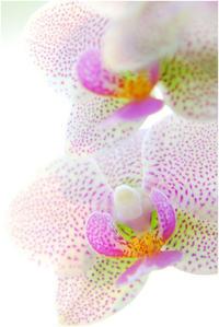 蘭の花 - HIGEMASA's Moody Photo