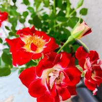 バラのワークショップ - フェルト手芸作家「PANENKA」北向邦子「わたしの毎日」