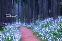 純白の森 - ** shympathy **
