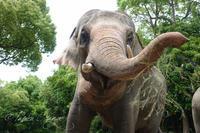 よこはま動物園ズーラシア2019年6月1日飼育体験 - お散歩ふぉと2