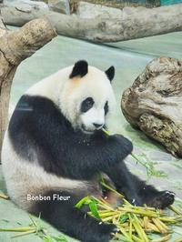 初台湾の旅⑤台北動物園 - Bonbon Fleur ~ Jours heureux  コサージュ&和装髪飾りボンボン・フルール