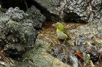 富士山麓の鳥・3 - 暮らしの中で