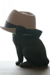 黒いリボンの麦わら帽子 - 猫の部屋