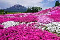 芝桜の庭 - お茶にしませんか2