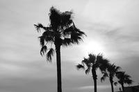 久しぶりの海へ【2】 - 写真の記憶