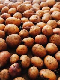 お芋がとれましたよ~(#^.^#) - 小さな料理アトリエ・結井言