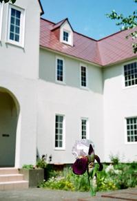 白い洋館の庭に咲くアヤメ - 照片画廊