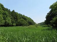 散歩2019.6.6四季の森公園の花菖蒲 - Gonta2019's Blog