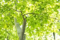 緑の森で - 四季燦燦 癒し系~^^かも風景写真
