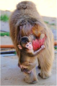小猿 - HIGEMASA's Moody Photo