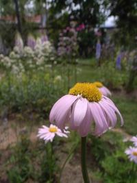 2019年デコルガーデン(Decor Garden)の花たち。 - カメラ小僧ぷーちゃんのGRフォトダイアリー。